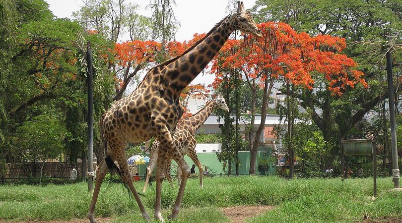amirthi-zoological-park-india