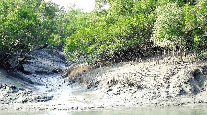 Netidhopani-Sundarban