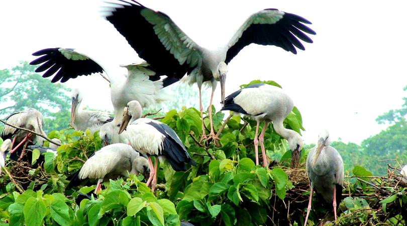 Sajnekhali-Bird-Sanctuary