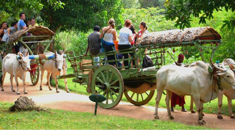 bullock-cart-mud-fort-kuchesar-india
