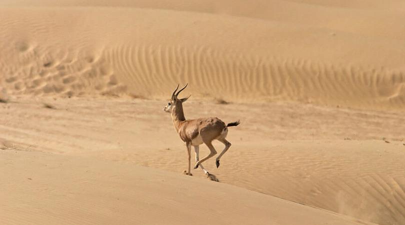 desert-in-rajasthan