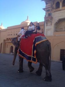 elephant-safari-amber-fort-jaipur