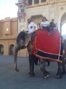 jaipur-elephant-safari-noble-house-tour