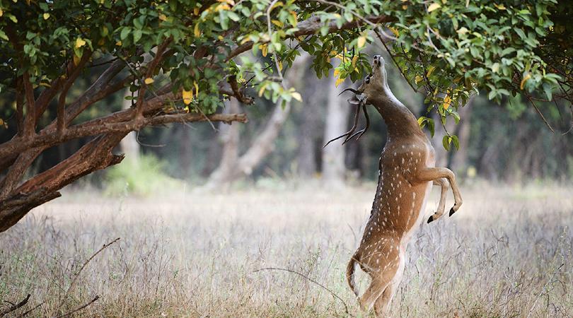 kanchula-korak-musk-deer-sanctuary-india