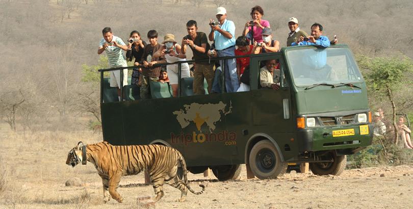 tiger-safari-canter-at-hotel-ranthambhore-regency