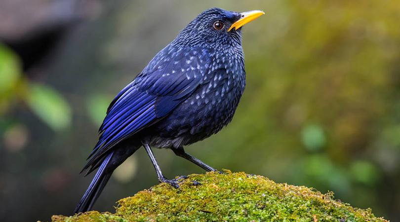 bird-watching-at-malshej-ghat