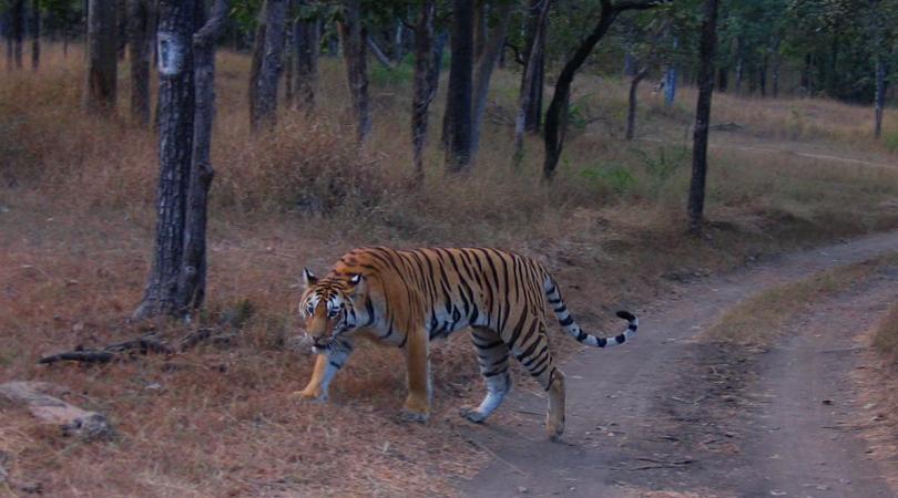 jalore-wildlife-sanctuary