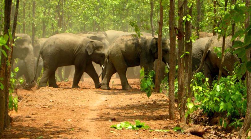 mahananda-wildlife-sanctuary