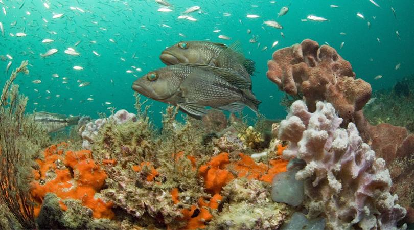 malvan-marine-sanctuary-india