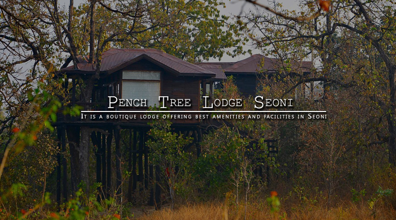 pench-tree-lodge-seoni-madhya-pradesh