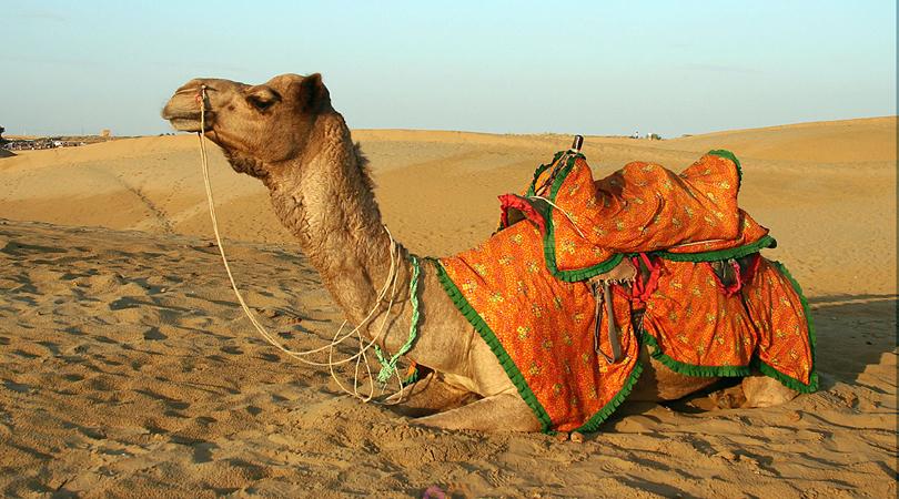 rajasthan-desert