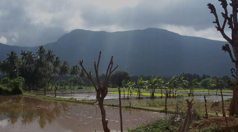 tampcol-medicinal-farm