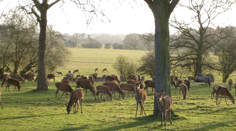 deer-park-in-bardhman