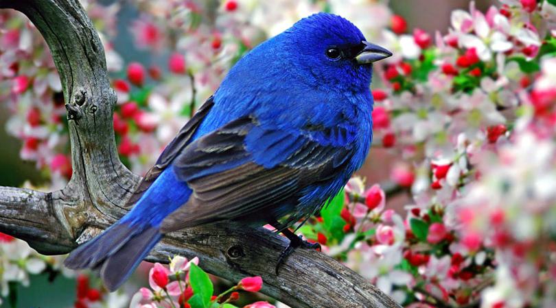 kadalundi-bird-sanctuary