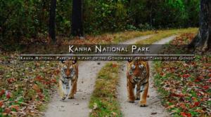 kanha-national-park-madhya-pradesh