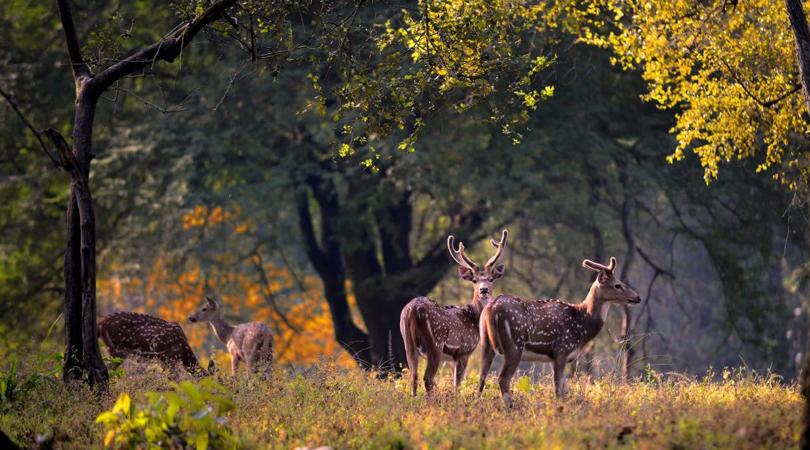 kanha-wildlife-india