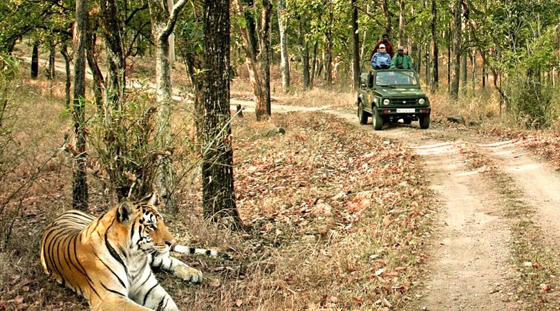 kanha's-jungle-safari