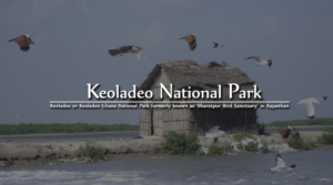 keoladeo-national-park-in-bharatpur