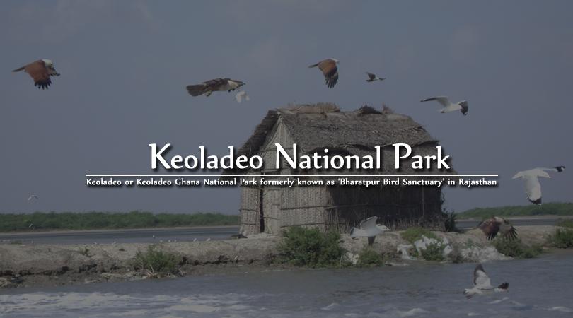 keoladeo-national-park-in-bharatpur