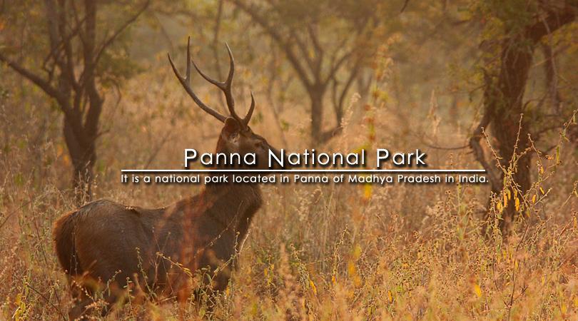 panna-national-park-of-madhya-pradesh