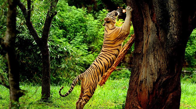 pushpagiri-wildlife-sanctuary-india