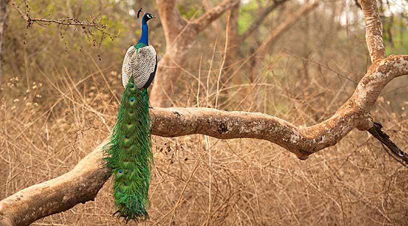 simla-british-resort-bird-creature-watching