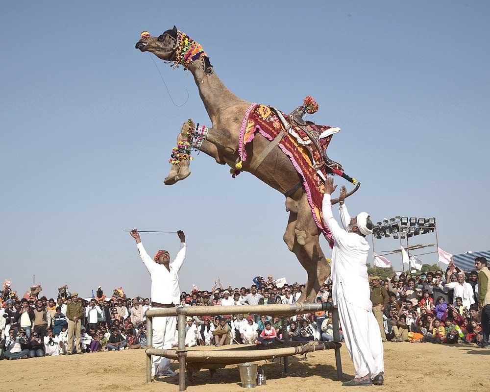 camel-bikaner-festival