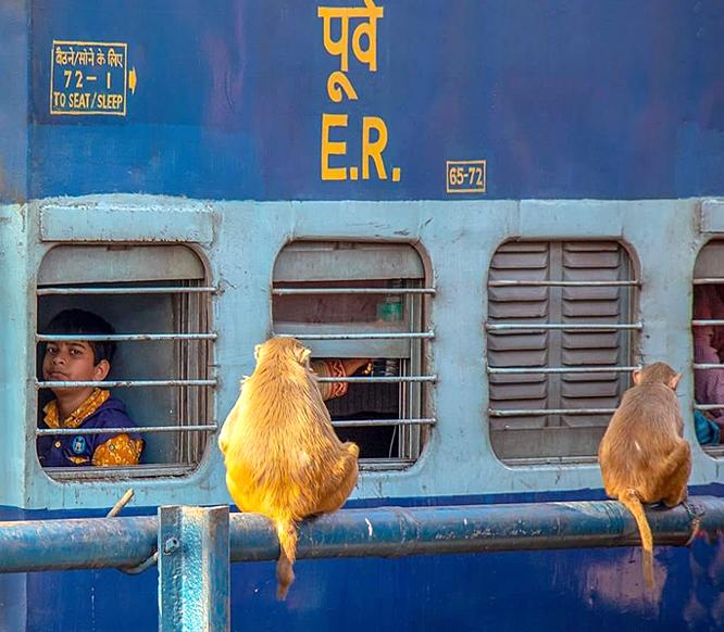 Trains Tours India