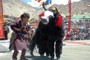 ladakh-festival-2019