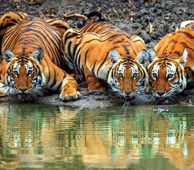 bandipur-national-park