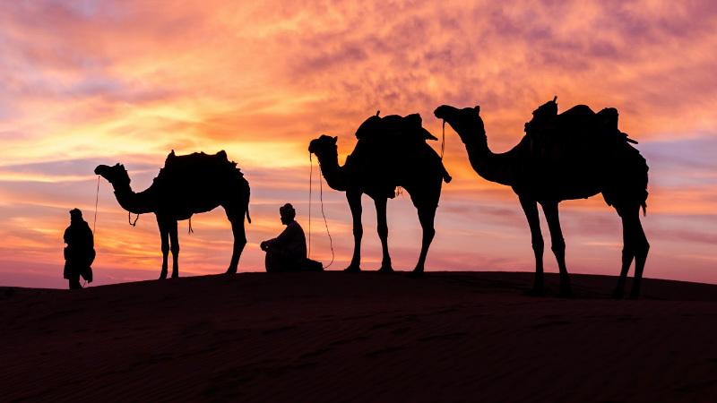 Camel Festivals In India