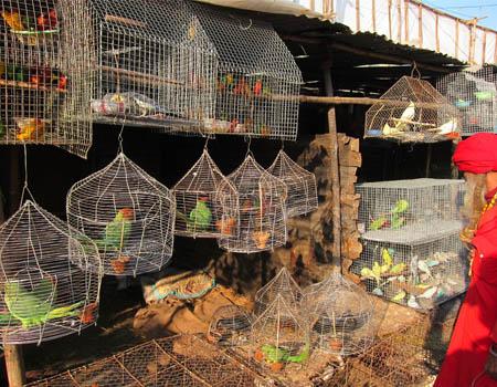 sonepur-mela-bird-market