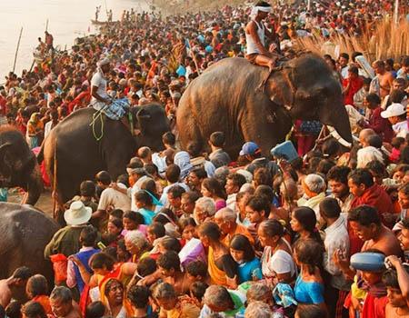 sonepur-mela-elephant-bathing-1