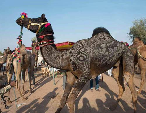 nagaur-cattle-fair