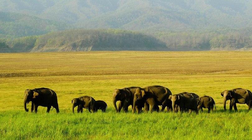 Jim Corbett National Park, Uttarakhand