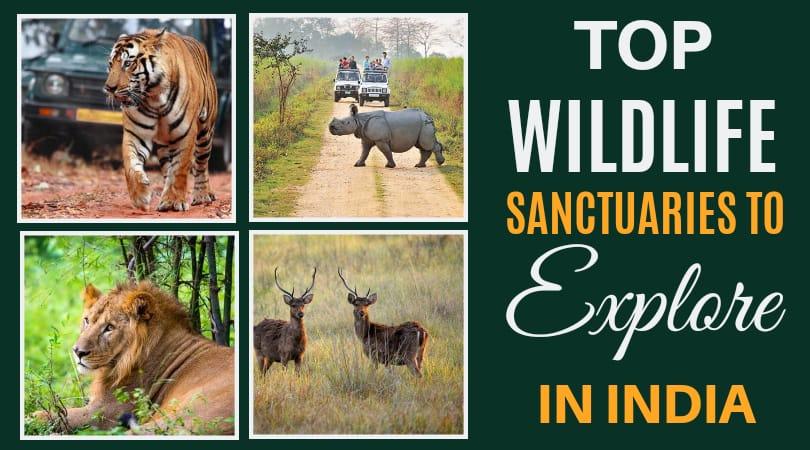 Top Wildlife Sanctuaries To Explore In India-featured image
