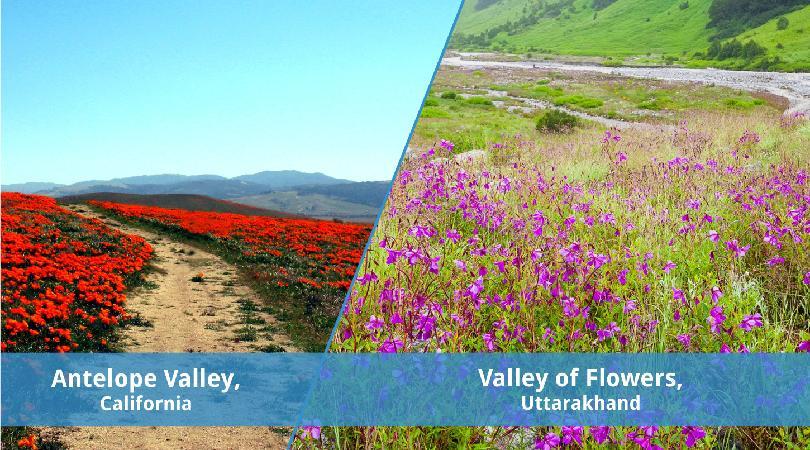 The Valley Of Flowers In Uttarakhand VS The Flowers In Antelope Valley