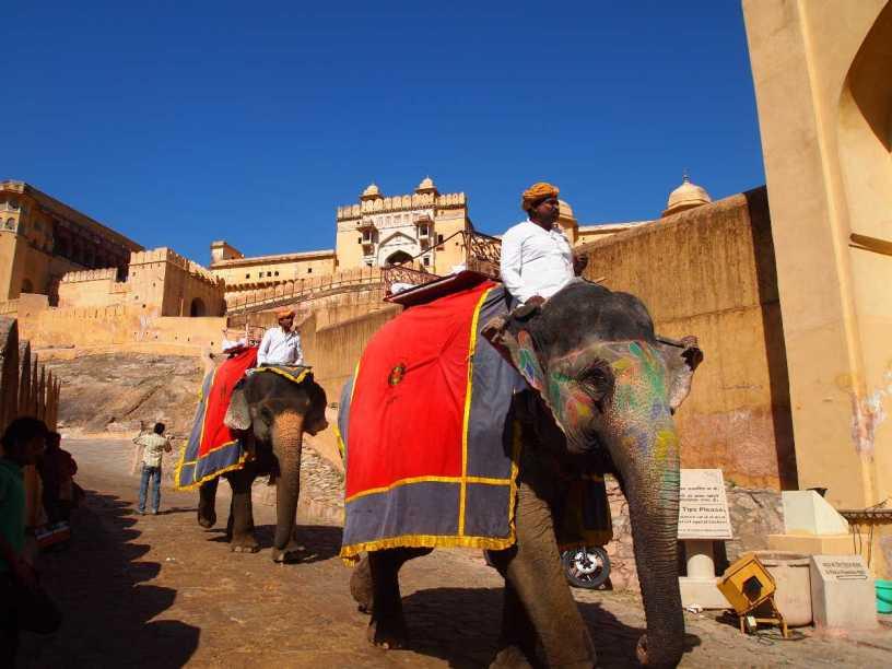 Enjoy Elephant Ride In Amber Fort (Jaipur)