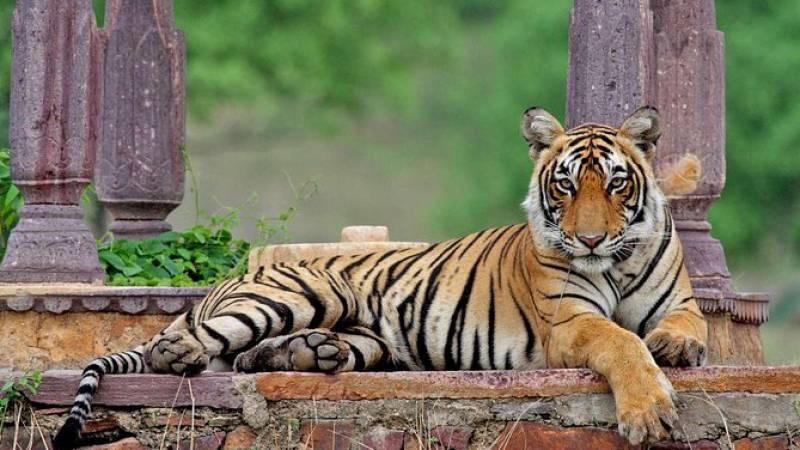 Enjoy Wildlife Safari Ranthambore