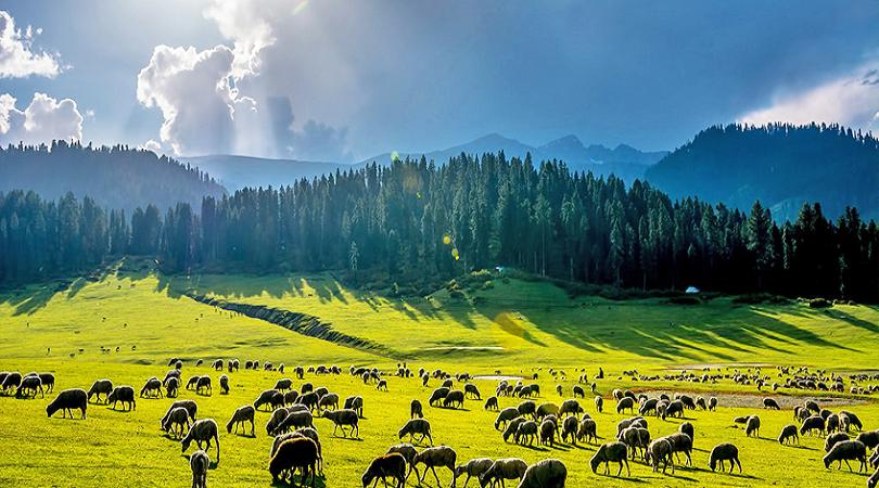 Chatpal, Jammu and Kashmir