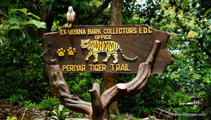 Head Into The Periyar Jungle