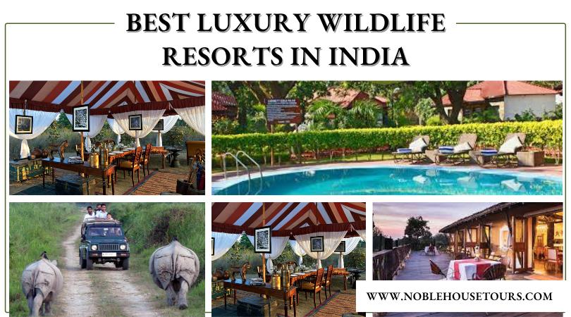 Best Luxury Wildlife Resorts in India